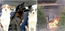 Homem arrisca a sua vida para salvar cães que estavam presos em carro pegando fogo nos EUA