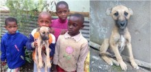 Crianças salvam sozinhas filhote abandonado no meio de estrada movimentada