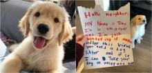 Garotinho escreve carta se oferecendo para ser babá do golden retriever das suas vizinhas
