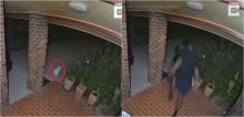 Vídeo hilário mostra pequeno cão maltês colocando ladrões para correr de sua casa - assista