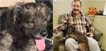 Homem vai a abrigo e escolhe cão idoso e doente para adotar e comove funcionários