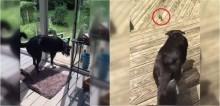 Ao perceber que pássaro está preso dentro de casa, cachorro o resgata e o devolve à natureza - vídeo