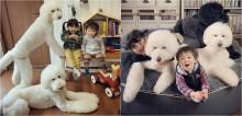 Crianças crescem com poodles gigantes em casa e criam laço fraternal de amor e amizade
