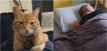 Gato foge de casa todas as noites para poder dormir com seus vizinhos