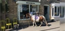 Montado em pônei, cachorro visita cafeteria na Inglaterra e imagem viraliza na internet
