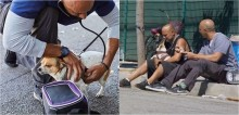 Veterinário fornece atendimento e tratamento para animais de rua nos Estados Unidos