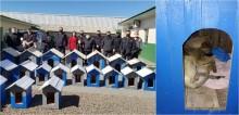 Detentos constroem 23 casinhas de cachorro para doar a ONG em Santa Catarina