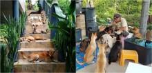 Casal se muda para ilha que não possui atendimento veterinário e começa a cuidar dos animais locais