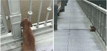 Cachorro permanece em ponte esperando dono que tirou a própria vida no local
