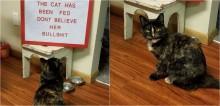 Dona deixa mensagem para impedir que gata engane os outros: 'Não acredite nela, ela já comeu!'