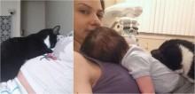 Gatinho ajuda a cuidar bebê de sua dona desde que descobriu que ela estava grávida
