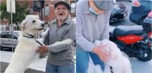Cachorro labradoodle fica extremamente feliz ao rever o seu vizinho idoso que estava doente