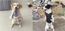 Cachorros que andam em apenas duas patas por conta de deficiência, dão verdadeiro exemplo de superação
