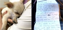 Mulher abandona filhote de chihuahua em banheiro de aeroporto com bilhete relatando maus-tratos de namorado