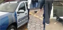 Cachorrinho acompanha dono preso até delegacia no PR: 'Companheiro de todas as horas'