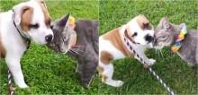Melhores amigos, cão e gato se despedem de maneira comovente quando o canino é adotado; confira