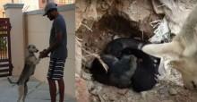 Cadela invade casa de homem e suplica ajuda para ele salvar seus filhotes; vídeo