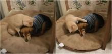 Em vídeo comovente, gato é visto consolando seu irmão cachorro que é deficiente visual
