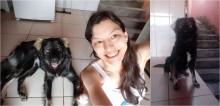 Mulher desiste de adotar cachorro de raça e acolhe vira-lata que a ajuda a superar depressão