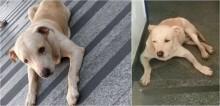 Funcionários se revezaram para cuidar de cão que aguardou dono internado em hospital de Cachoeiro (ES); vídeo