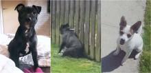 Cachorro se encontra todos os dias com cão vizinho para receber massagem através da cerca; confira o vídeo