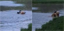 Cachorro golden retriever vê pato solitário em lago e o convida para ser seu melhor amigo; confira o vídeo