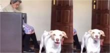 Cachorro late baixinho para não acordar a vovó que está dormindo ao lado; confira o vídeo