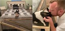 Homem constrói rampa para cachorro da namorada subir na sua cama e assistir filme com eles - assista o vídeo