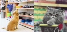 Vendas do setor voltado para animais de estimação resiste à crise do coronavírus