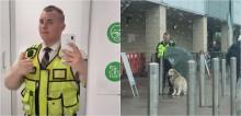 Segurança de supermercado protege cachorro golden retriever da chuva com guarda-chuva e foto viraliza