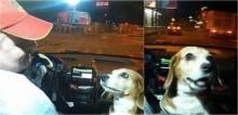 No Paraguai, taxista fascina clientes por realizar corridas com a presença da sua cadela