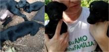 Cadelas abandonadas que nasceram sem as 4 patas no RS, são resgatadas e aguardam adoção