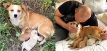Cadela abandonada que deu à luz em beira de estrada é resgatada com seus filhotes; confira o vídeo