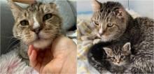 Gato de rua é resgatado por abrigo e passa a cuidar de filhotes como se fossem seus; assista