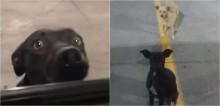 Cadelas que imploravam por atenção das pessoas em estacionamento são resgatadas