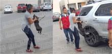 Mulher atropela acidentalmente cachorro e ao resgatá-lo ele finge estar desmaiado e a morde