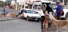 Mulher resolve adotar oito cães e taxista aceita levá-los em seu veículo; confira o vídeo
