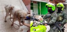 Cadela que estava trancada em casa abandonada é resgatada por policiais que a adotaram e a transformaram na mascote da corporação; assista