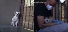 Cão encontrado tremendo de medo na rua muda completamente após socorrista lhe dar um abraço; confira