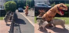 Em vídeo hilário, T-Rex 'invade' casa de cães Malamutes do Alasca para brincar com eles; assista