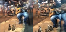 Artista de rua ignorado por todos recebe apoio de 4 gatinhos recém-nascidos; veja o vídeo