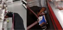 Cão doberman ajuda dono a fazer compras no supermercado e surpreende clientes; assista