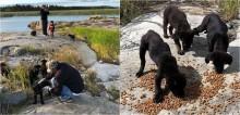 Homem encontra 7 filhotes de cachorro abandonados em ilha desabitada e ajuda a resgatá-los