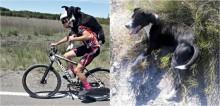 Ciclistas encontram cachorro desidratado em estrada e o carregam nas costas para salvar a sua vida; assista o vídeo