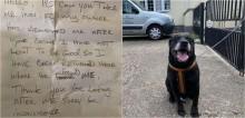 Depois de 10 anos, labrador é abandonado pelo dono com bilhete dizendo que cão 'não aprendeu a ser bom'