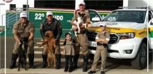 Cadelas que viviam em rodovia movimentada são adotadas por policiais rodoviários em Santa Catarina