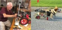 Aos 92 anos, veterinário aposentado usa seu tempo para construir carrinhos para animais paraplégicos