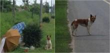 Cachorro foi abandonado pelo dono em beira de estrada e aguarda por dois meses seus retorno