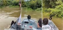 Pescadores salvam macaco que estava se afogando no rio Teles Pires e o levam até terra firme; vídeo