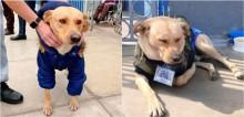 Cachorro acompanha dono com covid-19 até hospital e permanece na porta a sua espera